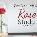 Beauty & the Beast Inspired Rose Study