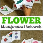 FREE Flower Identification Flash Cards