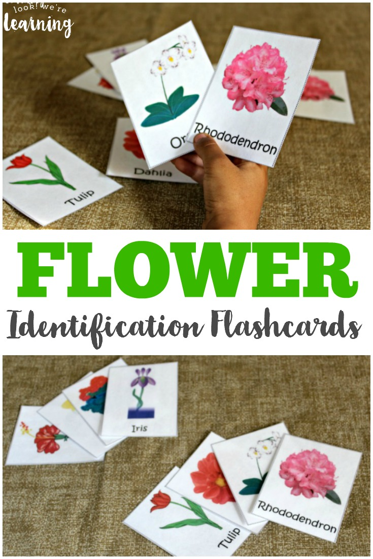 Use these FREE flashcards, from From Look We're Learning, to learn types of flowers or even use them for a fun Spring Scavenger Hunt. :: www.thriftyhomeschoolers.com