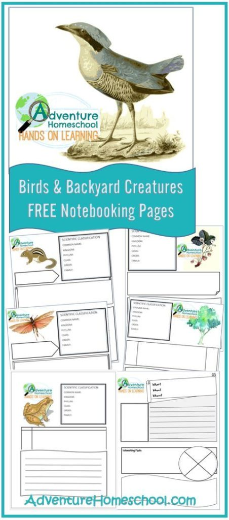 Kids will love recording their observations and findings with these Free Birds & Backyard Creatures Notebooking Pages. :: www.thriftyhomeschoolers.com