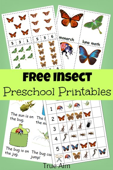 If your little ones are studying insects this year, don't miss this Preschool printables pack. :: www.thriftyhomeschoolers.com