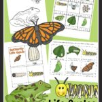 Free Butterfly and Frog Life Cycles Printable Pack
