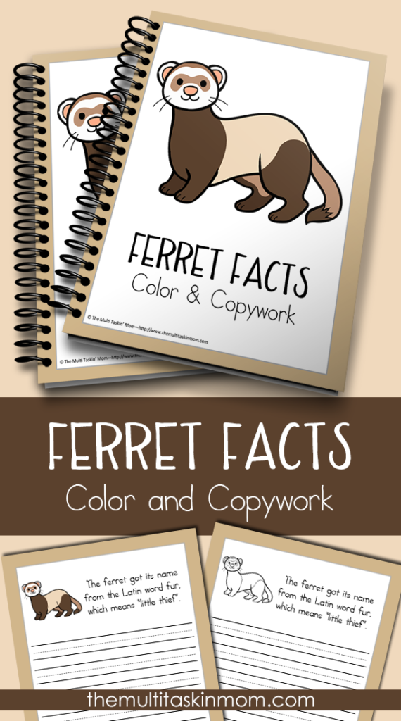 Learn more about the Ferret with this fun Color and Copywork pack! Great for kids PreK-5th grade. :: www.thriftyhomeschoolers.com