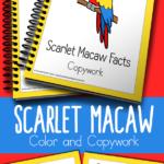 Free Scarlet Macaw Copywork Printables