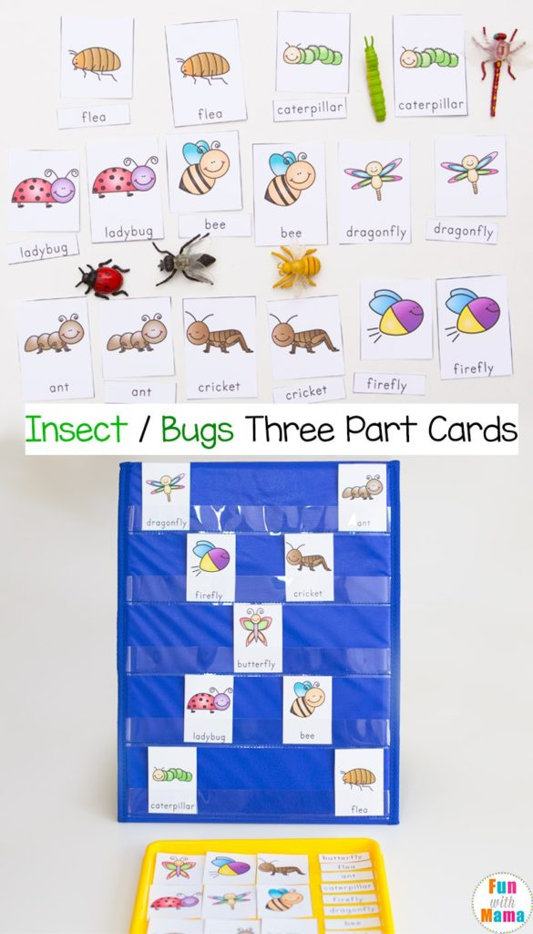Help little ones learn more about insects & bugs with this Free 3-part card set! :: www.thriftyhomeschoolers.com