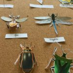 Paper Insect Display Printables