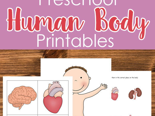 Free Human Body Printables for Preschoolers