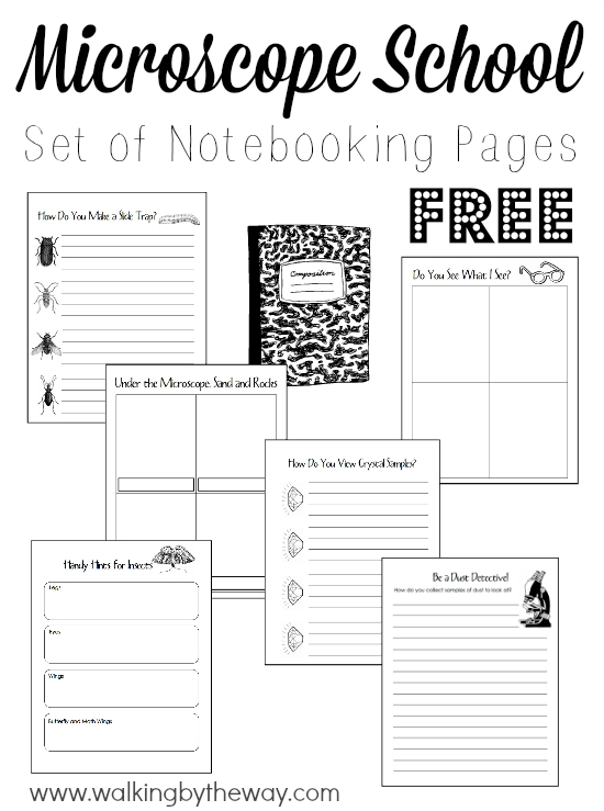 Grab this FREE set of Microscrope Notebooking pages to help your kids learn how to use a microscope and explore what they will see! Includes 28 pages. :: www.thriftyhomeschoolers.com