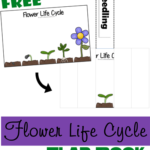 Free Flower Life Cycle Flap Book