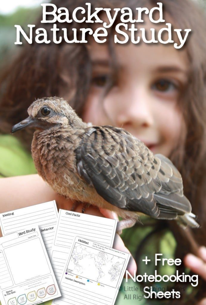 Record all your birdwatching observations with these free Nature Study Notebooking Pages. :: www.thriftyhomeschoolers.com