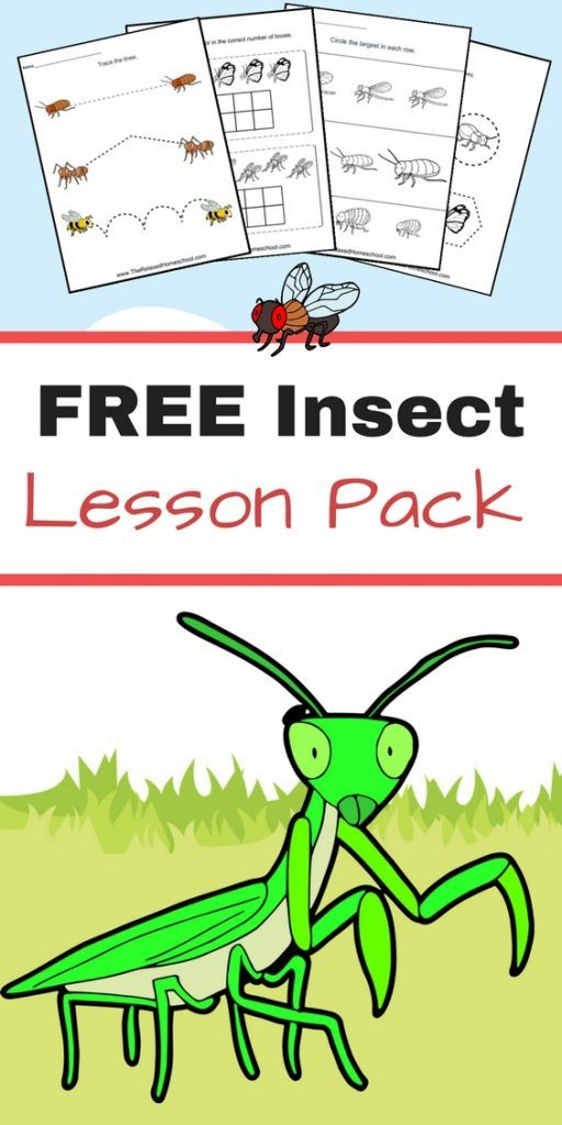 Kids will have fun learning more about insects with this free printable Insect Lesson Pack! :: www.thriftyhomeschoolers.com
