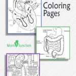 10 Free Anatomy Coloring Pages