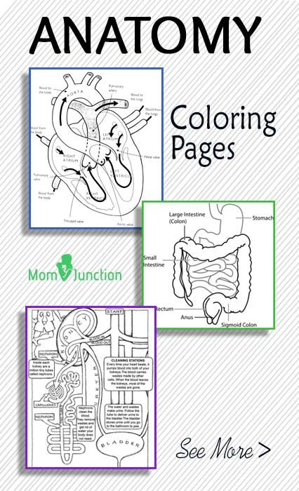 10 Free Anatomy Coloring Pages - Thrifty Homeschoolers