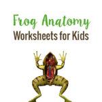 Free Frog Anatomy Worksheets