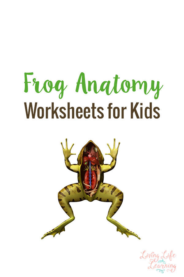 Introduce kids to the anatomy of a frog with this simple set of printables! :: www.thriftyhomeschoolers.com