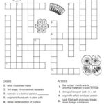 Free Cells Worksheets