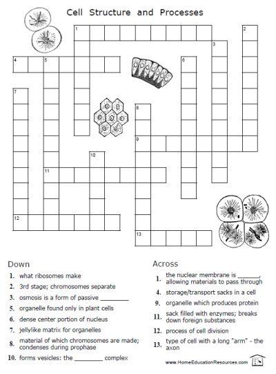 free cells worksheets thrifty homeschoolers. Black Bedroom Furniture Sets. Home Design Ideas