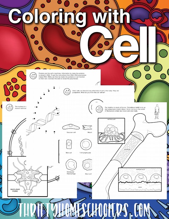 Make Biology fun with this printable coloring book. Not only is it full of fun coloring pages, but also great information a word search and more! :: www.thriftyhomeschoolers.com