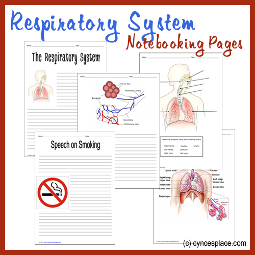Help them remember and retain all learn about the respiratory system with these printable notebooking pages. :: www.thriftyhomeschoolers.com