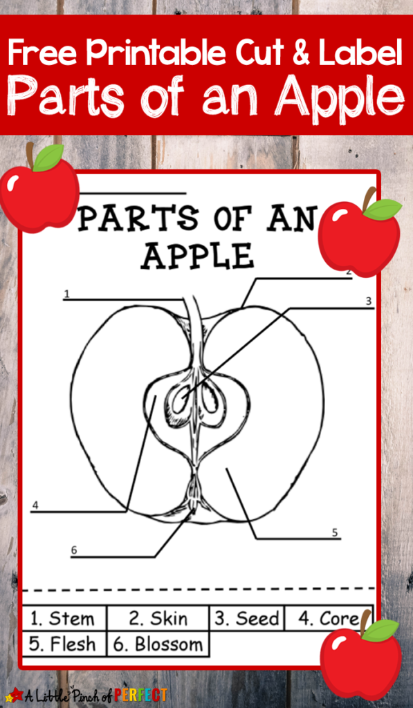 Parts Of An Apple Labeling Printable