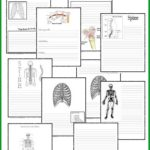 Free Skeletal System Notebooking Pages