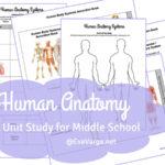 Middle School Anatomy Unit Study