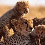 Free Animal Studies – Lessons, printables & more