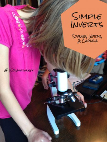 Are you studying invertebrates this year? Grab this free foldable printable! :: www.thriftyhomeschoolers.com
