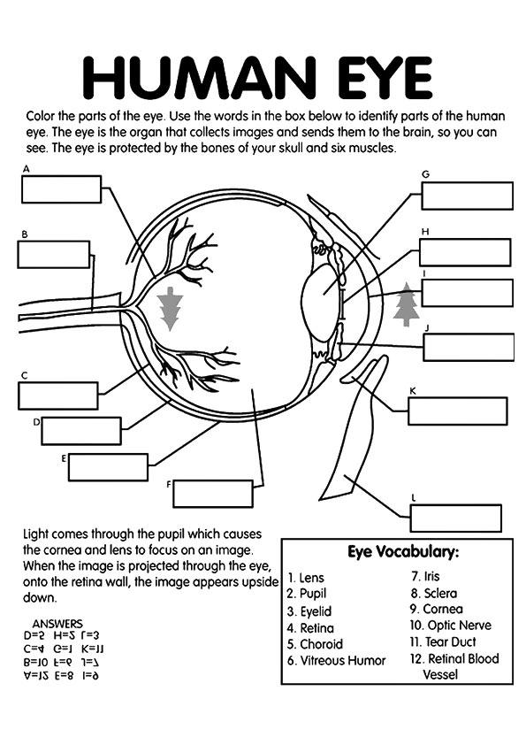 free human eye labeling printable