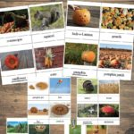 Fall Words for Kids – 24 Printable 3-Part Cards