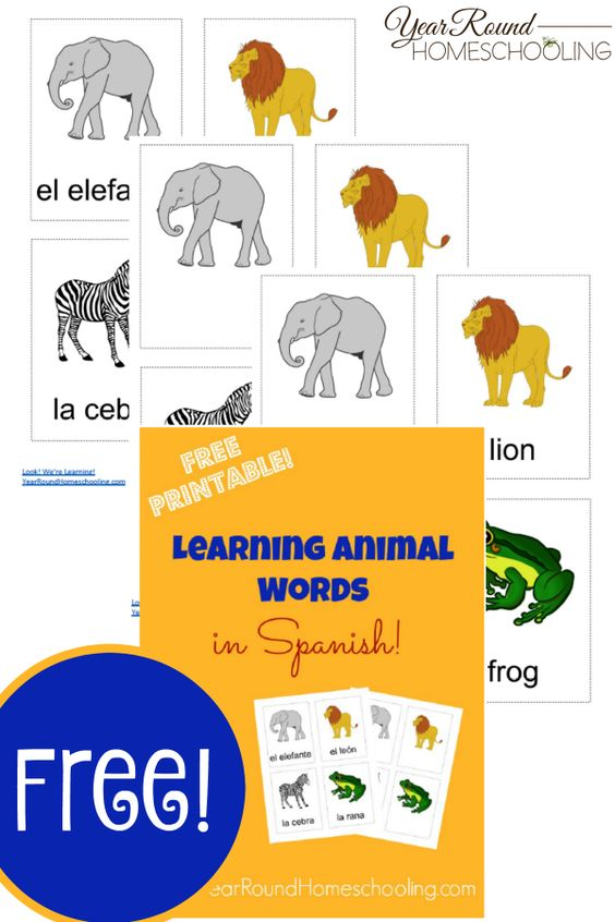 Are your kids learning Spanish? These printable Spanish Animal Name Flashcards are a great way to review! :: www.thriftyhomeschoolers.com