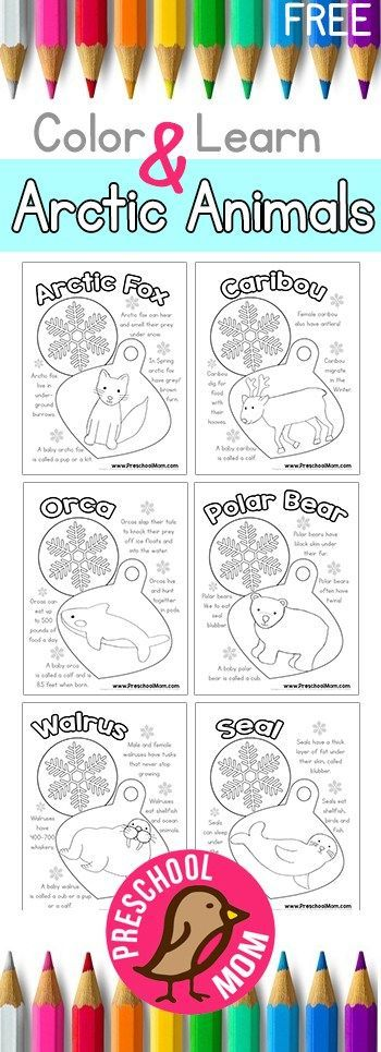 These Arctic Animals printables are perfect for a unit study! :: www.thriftyhomeschoolers.com