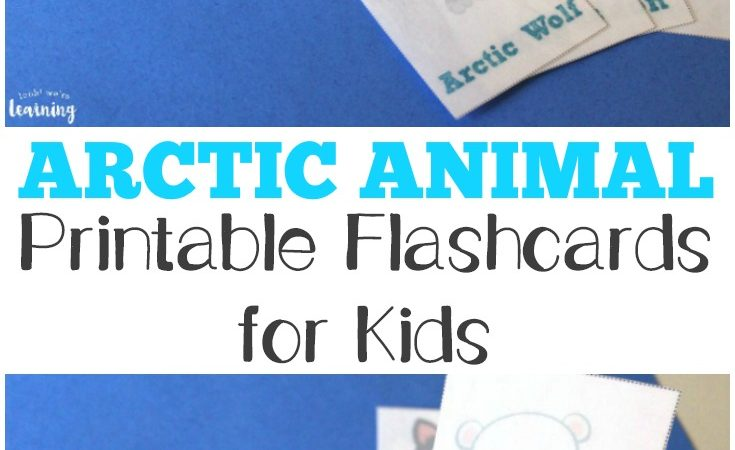 Arctic Animal Flashcards Freebie