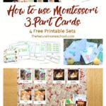How to use Montessori 3-Part Cards {Free Printables}