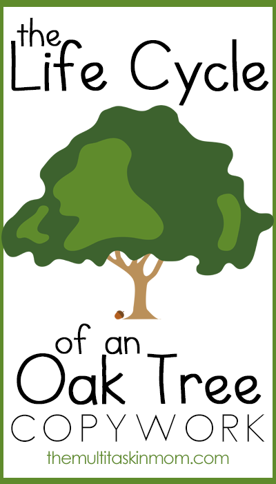With Earth Day and Arbor Day on the horizon and winter coming to a close in the next few weeks, now is the time to learn about trees. Elementary ages can learn about the Life Cycle of an Oak Tree with this printable copywork, available in both manuscript and cursive. :: www.thriftyhomeschoolers.com