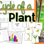 FREE Life Cycle of a Plant Printables