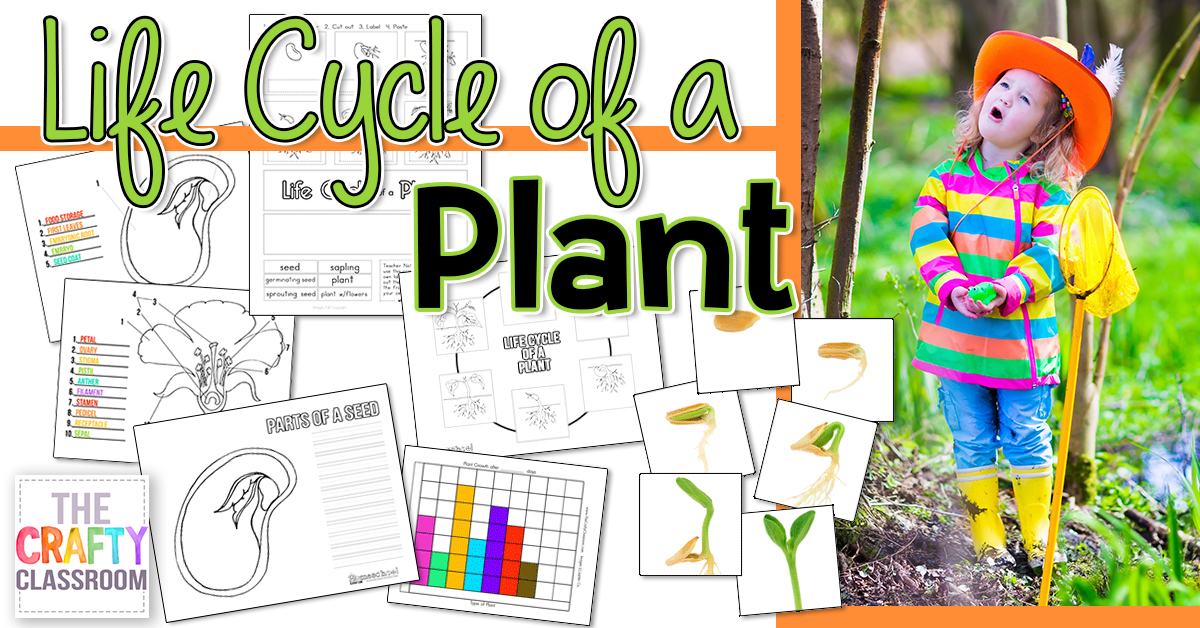 Spring is the perfect time for learning about plants and their life cycle. Whether you plant your own seeds and watch them grow or just study the life cycle on paper, kids will love working through these printables. :: www.thriftyhomeschoolers.com