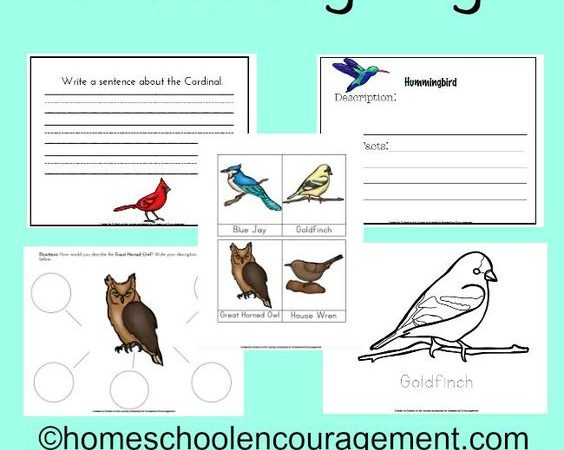 Notebooking Pages for Studying Backyard Birds