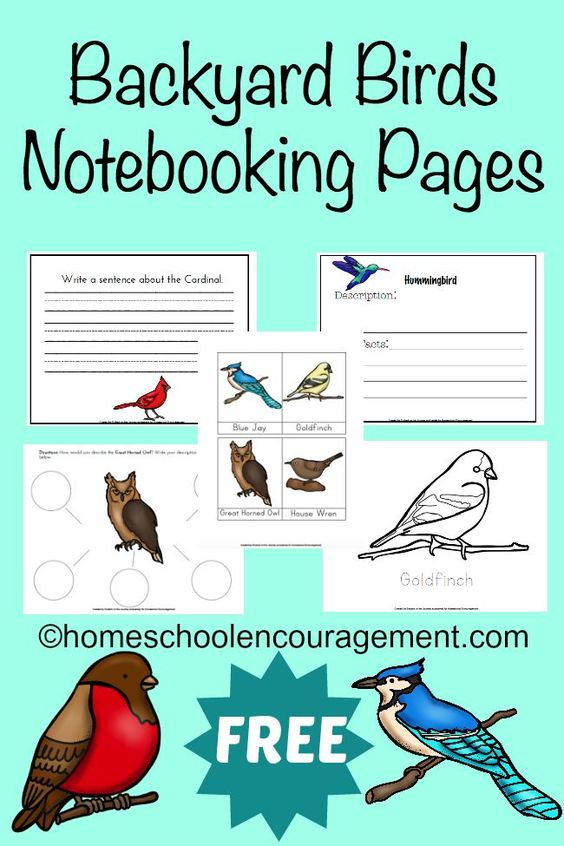 Spring is in the air!If you have birds in or near your backyard, be sure to download your FREE Notebooking Pages today! Kids will love learning about the different kinds they will see. :: www.thriftyhomeschoolers.com