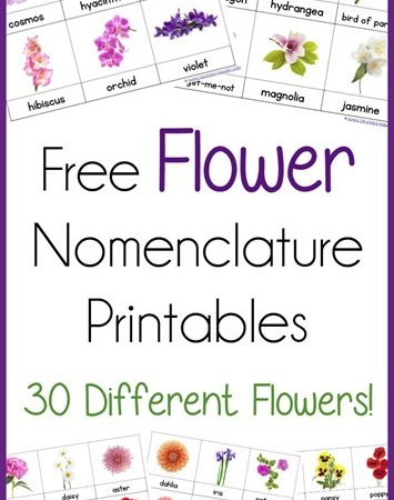FREE Flower Nomenclature Cards