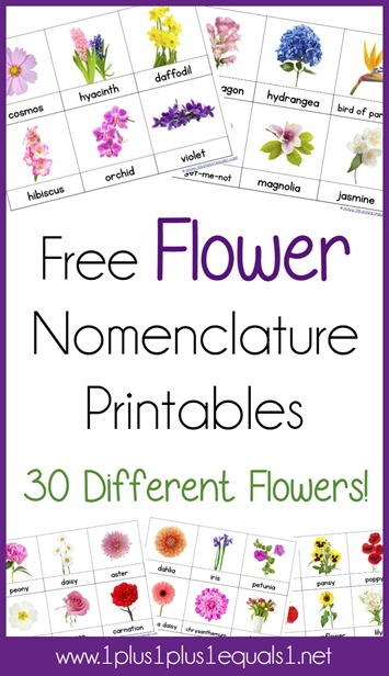 Every time we talk a walk, my kids want to know the names of all the flowers, and I'll be honest...I don't know half of them. But with these FREE Flower Nomenclature Cards we can all learn them together! :: www.thriftyhomeschoolers.com
