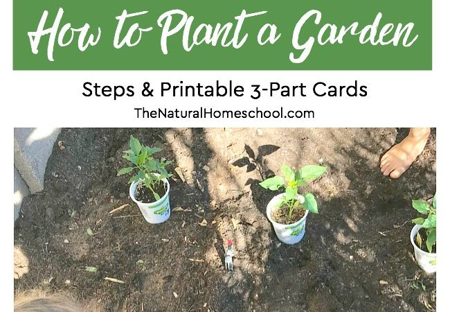 How to Plant a Garden Steps & Printable Montessori 3-Part Cards