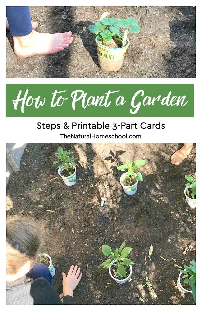 how to plant a garden steps  u0026 printable montessori 3-part cards
