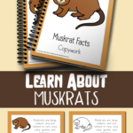 FREE Muskrat Facts Color & Copywork (Ends 4.22.18)