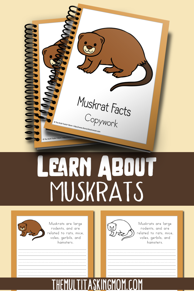 I don't know much about the Muskrat, but my kids love learning about new animals. If your kids love learning about new animals too, don't miss this limited time freebie! :: www.thriftyhomeschoolers.com