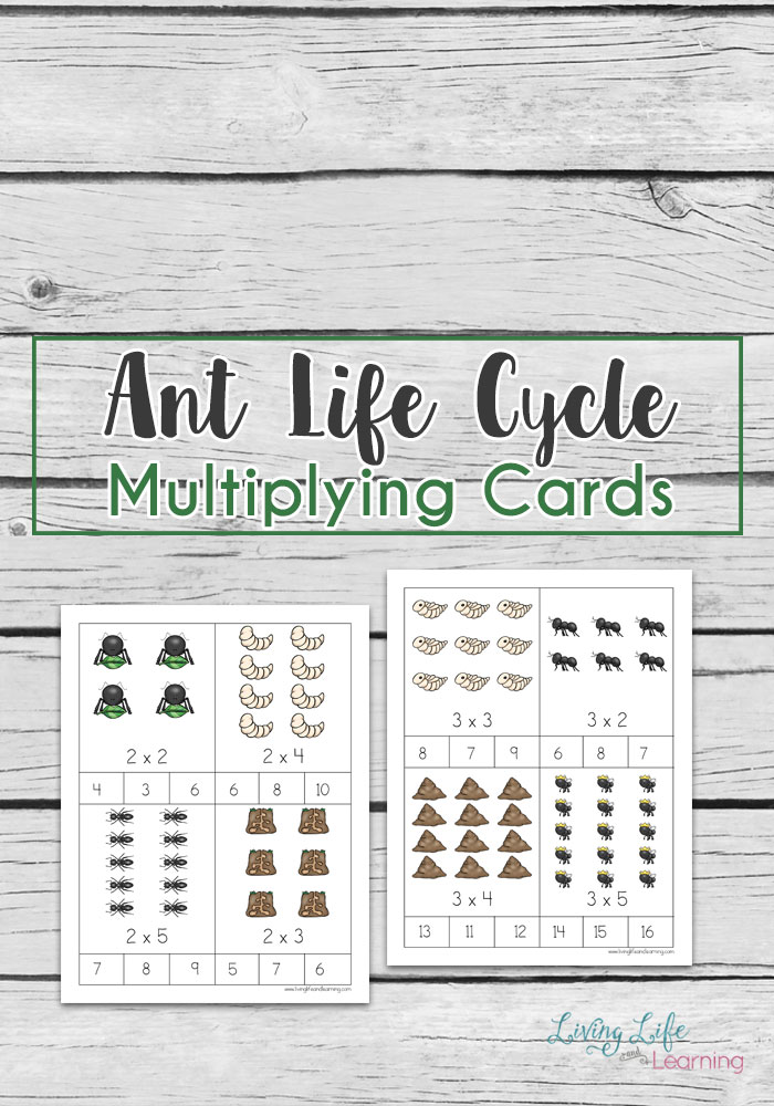 Multiplication can be a very difficult math concept to teach and to learn. One of the ways that we can succeedin this is by making the process interesting. These ant life cycle multiplication card could do just that if you have a young bug lover in your life.