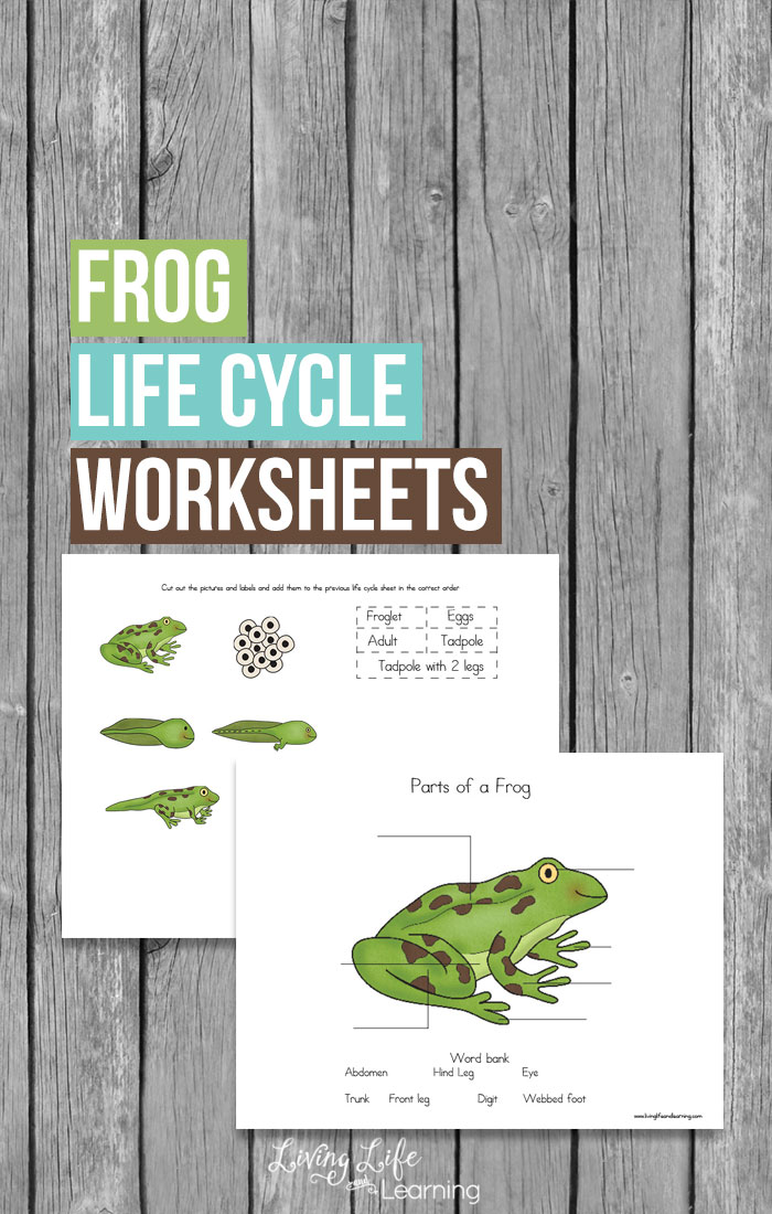 With Spring there are always frogs. Teaching your children about the frog life cycle just got easier with these free worksheets. Included in these worksheets are a place to label the parts of a frog and a frog life cycle labeling sheet.