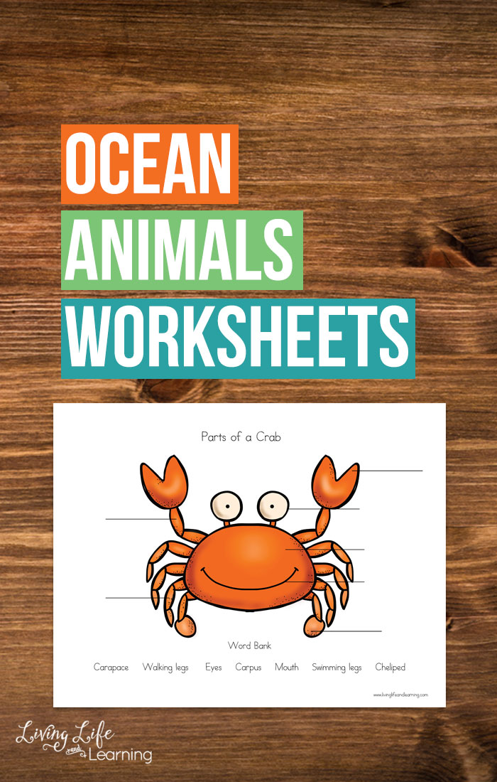 If you are looking to take your Ocean themed activities to the next level then you are going to love these Parts of Ocean Animals Worksheets. With these worksheets, your child is able to dig even deeper into the ocean animals they love.