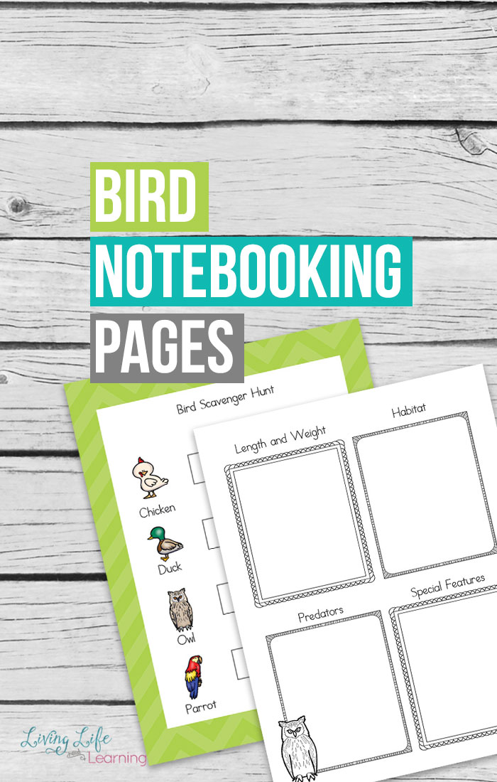 One of the great things about warmer weather is the ability to go on nature walks. Of course, it also means that you can see all kinds of birds on those walks. Your children will love learning about the birds that they discover with these bird notebooking pages.