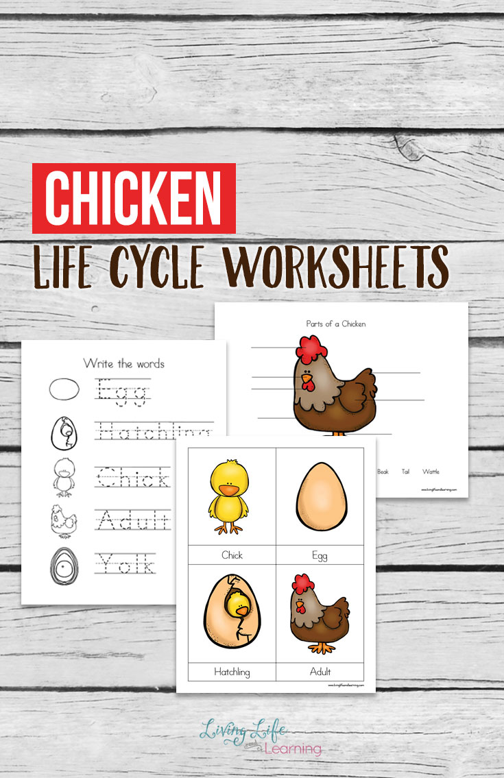 Chickens are such fascinatinganimals once you begin to study them with your little ones. This chicken life cycle packet can be a great help as you begin to teach your young ones all about chickens with its labeling sheets, writing practice sheet and more.